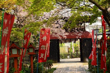 桜吹雪の長建寺