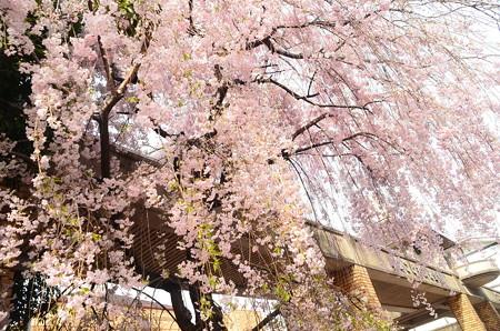 京都こども文化会館