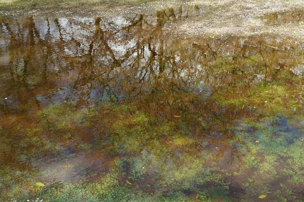 水溜まりに、春の景色