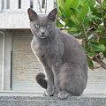 Photos: ロシくん