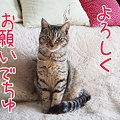 Photos: 090131-よろしくお願いでちゅ!
