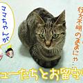 Photos: 080319-チューとお留守番にゃ!