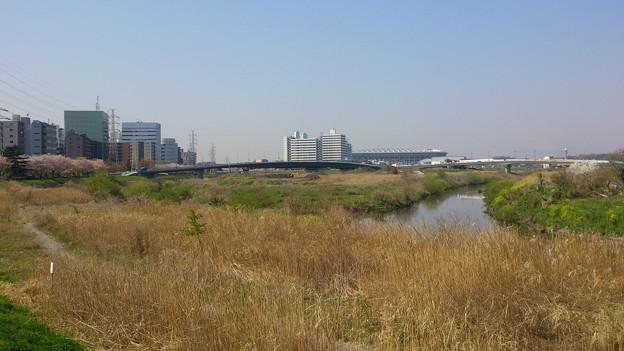 写真: 14040803_鶴見川_2048