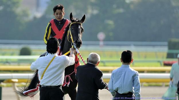 [140427東京11RフローラS]サングレアル「頑張ったのに岩田さんペタペタしてくれないの!」松田先生「はいはい、こっちむきましょうね」 #ジロリ馬
