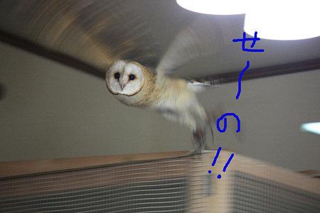 mame H21.3.28  せーの!