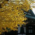 写真: 延命寺
