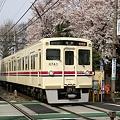 桜の下6030系の準特急が新宿へ急ぐ