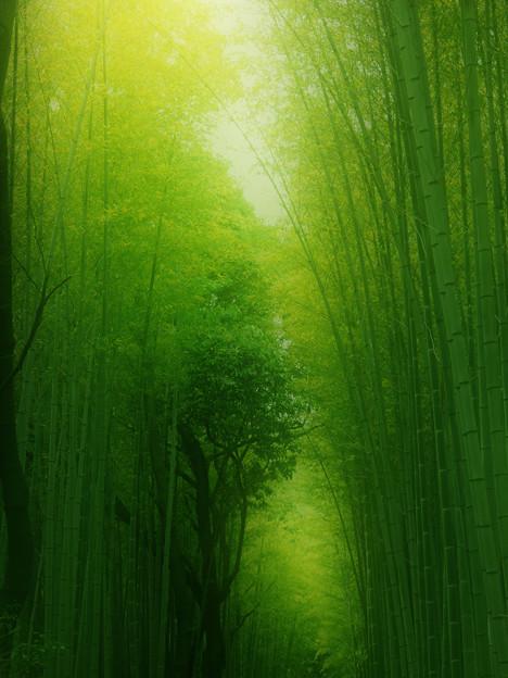 写真: 緑の世界