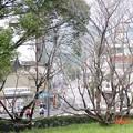 39-高知 高知市 高知城 すべり山から小津町