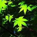 写真: 木洩れ日を浴びてII