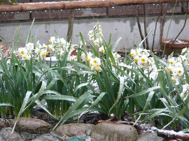 Photos: なごり雪5
