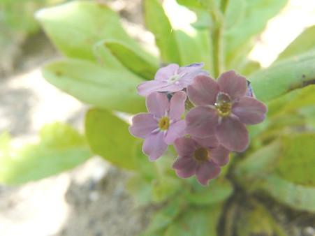 2009-5-20 庭の花・はな・華 (4) やわらかな気持ち・・ピンクの花たち