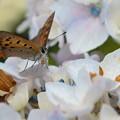 蝶のチョット、ひと休み