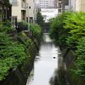 Photos: 雨の川