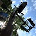 Photos: 緑と空と信号と。