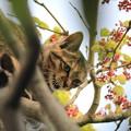 Photos: 木の上のとら