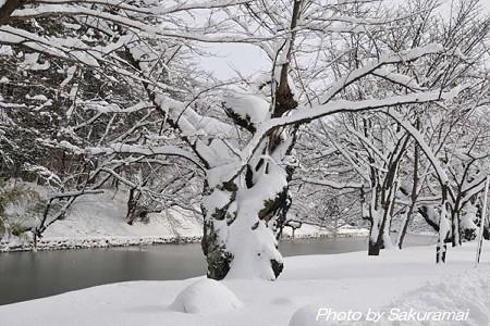 雪を抱く木
