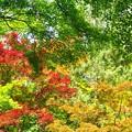 新緑_杉村公園09