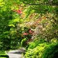 新緑_杉村公園06