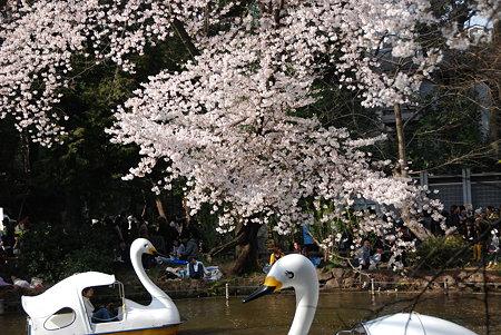 20090404_03126井の頭公園