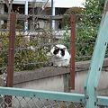 Photos: 水門猫さん(R0010177)