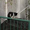 写真: 水門猫さん(R0012333)