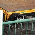 写真: 水門猫さん(R0012339)