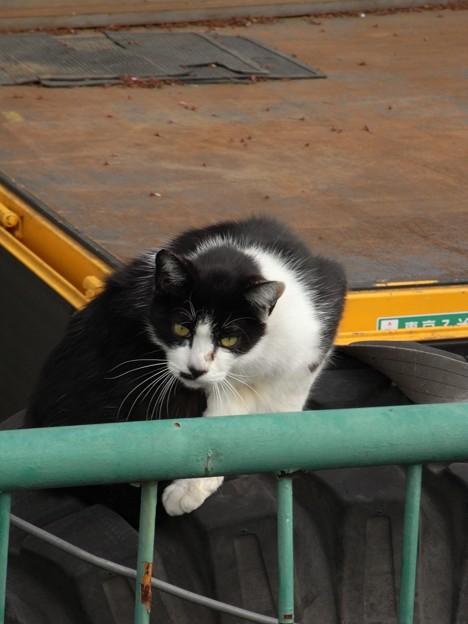 写真: 水門猫さん(R0012342)