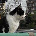 写真: 水門猫さん(R0012357)
