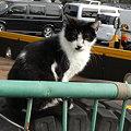 写真: 水門猫さん(R0012366)