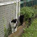写真: 水門猫さん(R0012372)