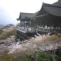 2008/4/9-10 京都・日光