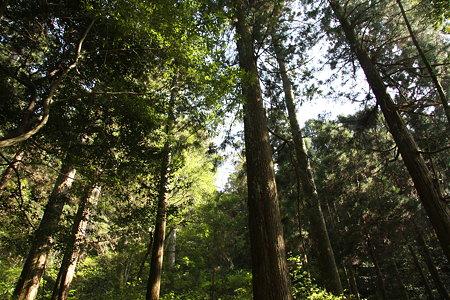 森の巨人2