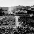 Photos: 畑仕事の人