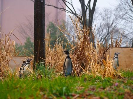 20140330 ペンヒル 雨のペンギンヒルズ02