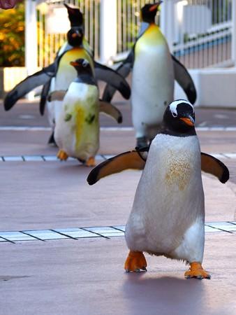 20121207 アドベン ペンギンパレード06