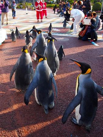20131207 アドベン ペンギンパレード36