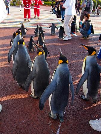 20131207 アドベン ペンギンパレード35