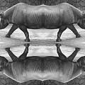 Photos: Rhinoceros