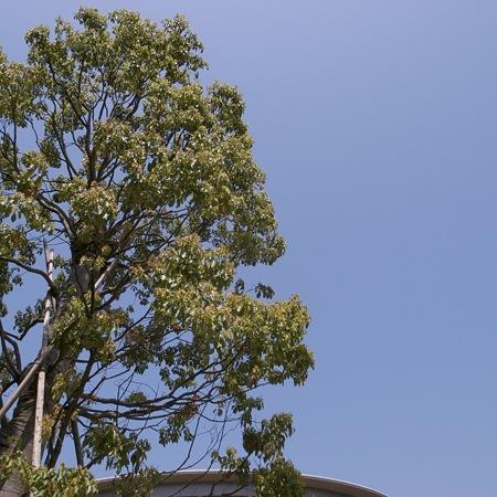 2009-04-19の空
