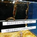 海の生物館シーパレスのトラザメの卵