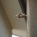写真: スズメの親子