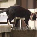 野良猫 vs 撮影者!?(おまけ)