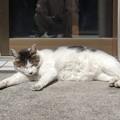 写真: 左手を上げない猫