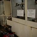 Photos: 草津 熱帯圏0021