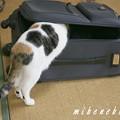 Photos: スーツケース2