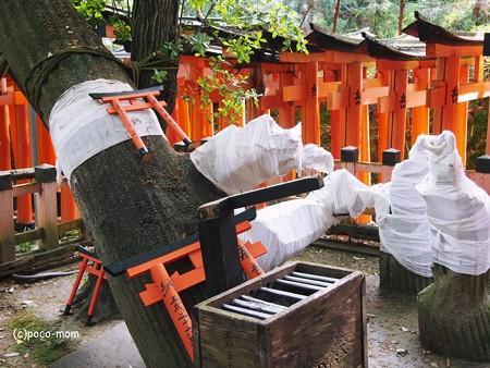 京都伏見稲荷 奥院2014年05月04日_P5040715