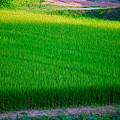 2008_0808夏里夕景0109