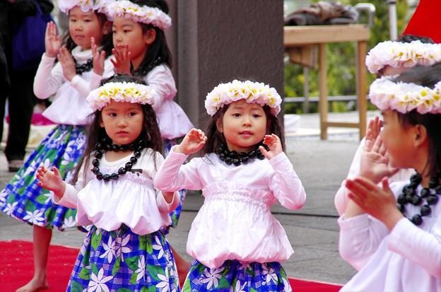 津久井湖さくら祭り09「踊り忘れちゃった」
