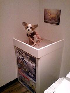 ドッグカフェのトイレ